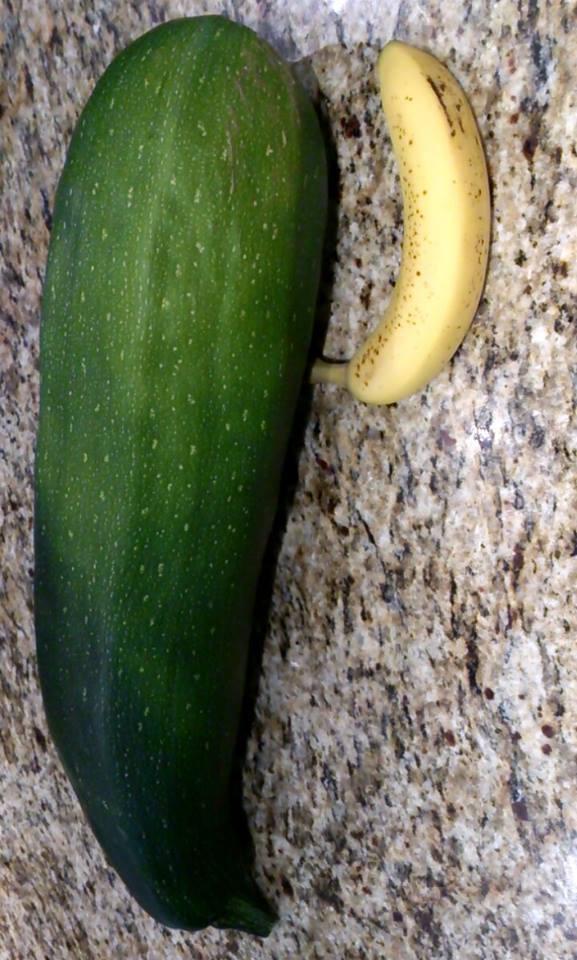 Worlds Largest Zucchini